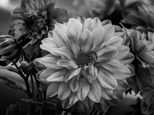 Photograph - Dahlia And Friends by Bob Orsillo