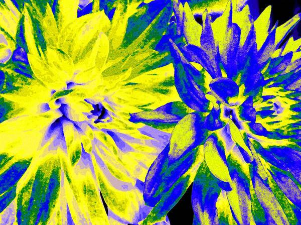 Wall Art - Digital Art - Dahlia Decor by Will Borden