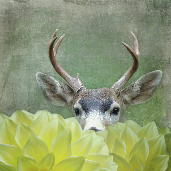 Digital Art - Dahlia Deer by Sally Banfill