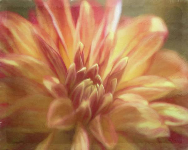 Photograph - Dahlia Dream by Teresa Wilson