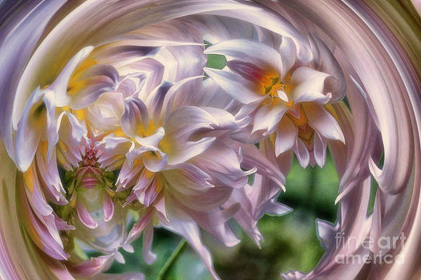 Photograph - Dahlia Ecstasy by Mary Lou Chmura