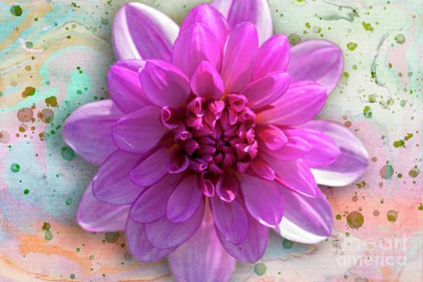 Wall Art - Photograph - Dahlia Flower Series One by Heiko Koehrer-Wagner