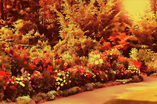 Photograph - Dahlia Garden 6a by Lawrence Christopher