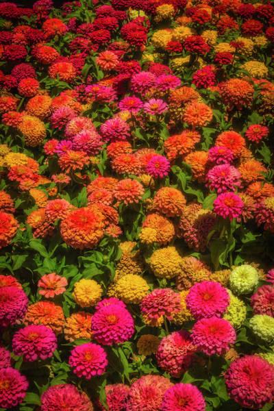 Wall Art - Photograph - Dahlia Garden by Garry Gay