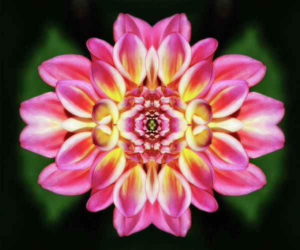 Photograph - Dahlia Glow by Wes and Dotty Weber