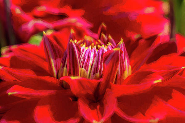 Photograph - Dahlia Study 1 Painterly by Scott Campbell