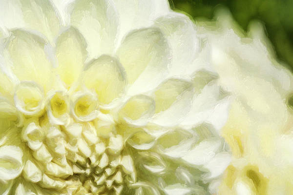 Photograph - Dahlia Study 4 Painterly by Scott Campbell