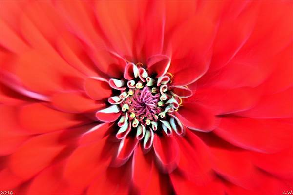 Photograph - Dahlia Zoom by Lisa Wooten