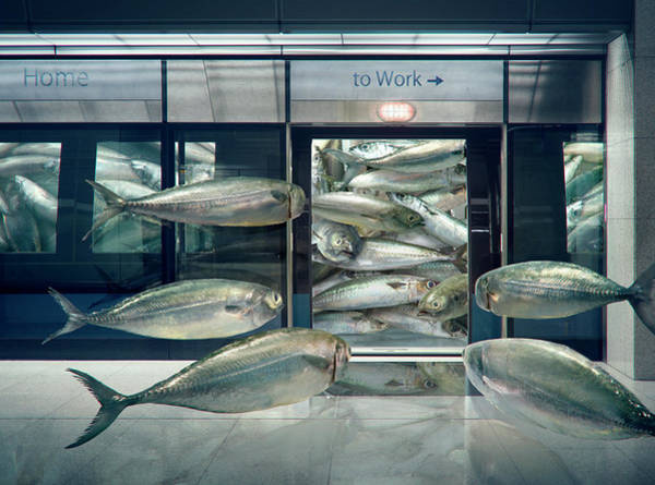Digital Art - Daily Sardine by Andrew Kow