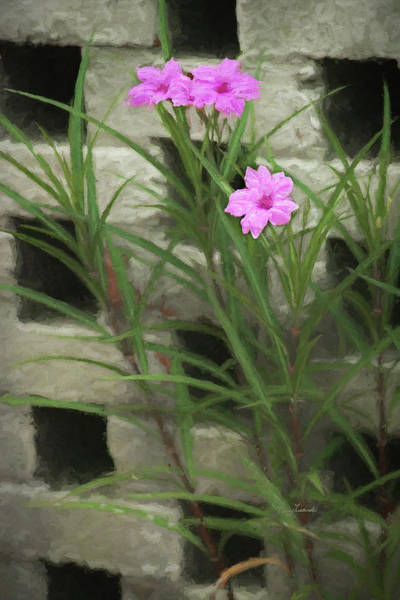 Photograph - Dainty Pink by Penny Lisowski