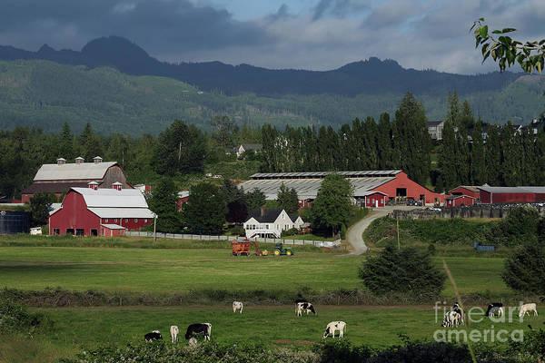 Wall Art - Photograph - Dairy Farm by Rick Mann
