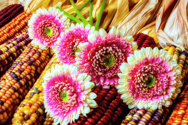 Wall Art - Photograph - Daises On Indian Corn by Garry Gay