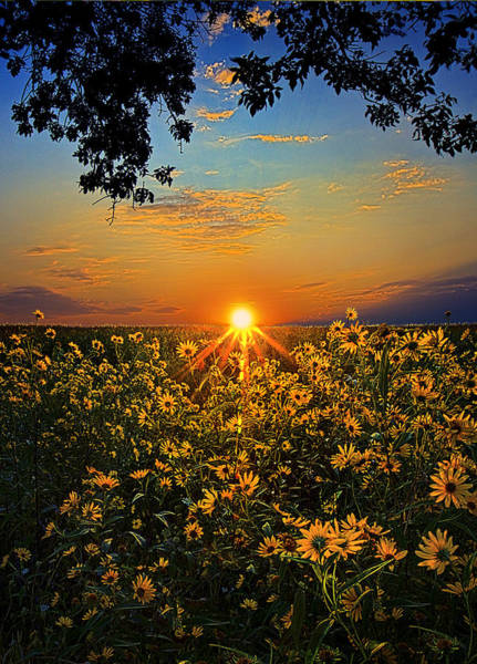 Natur Wall Art - Photograph - Daiseyland by Phil Koch