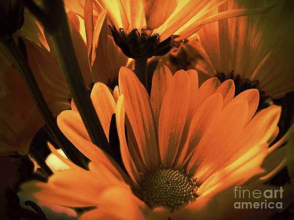 Photograph - Daisies All Around by Kelly Holm