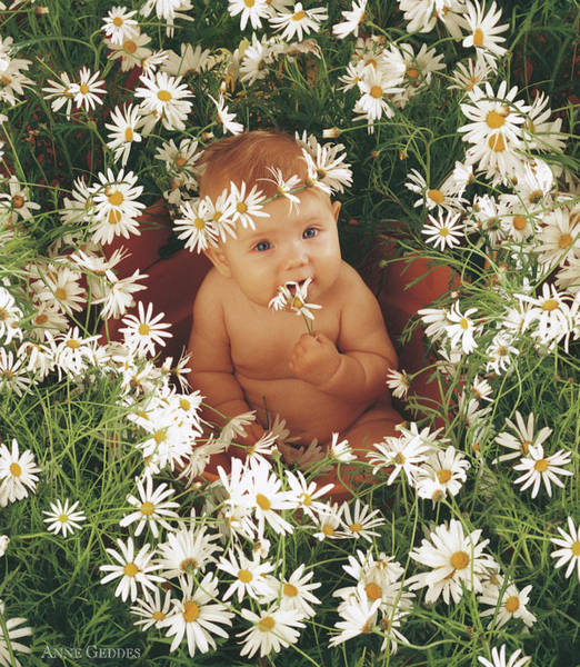 Nursery Photograph - Daisies by Anne Geddes