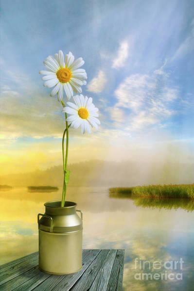Wild Life Mixed Media - Daisies In The Summer Morning by Veikko Suikkanen