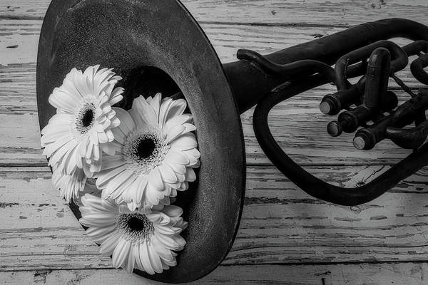 Dent Photograph - Daisies In Tuba In Black And White by Garry Gay