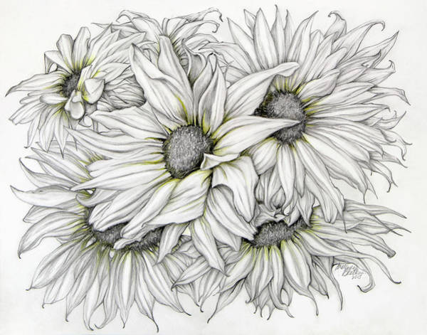 Drawing - Sunflowers Pencil by Melinda Blackman