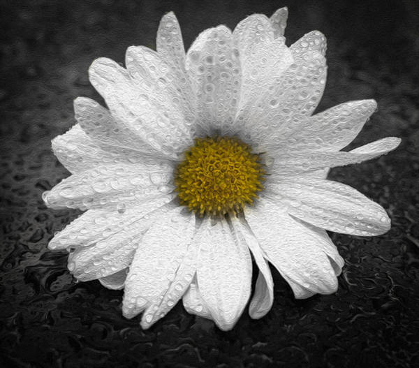 Digital Art - Daisy And Droplets 2 by Keith Smith