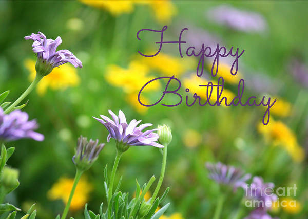 Photograph - Daisy Birthday Card by Carol Groenen