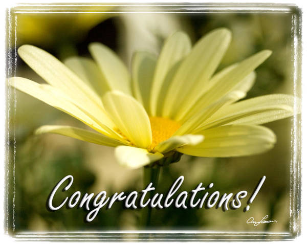 Photograph - Daisy Congrats by Ann Lauwers
