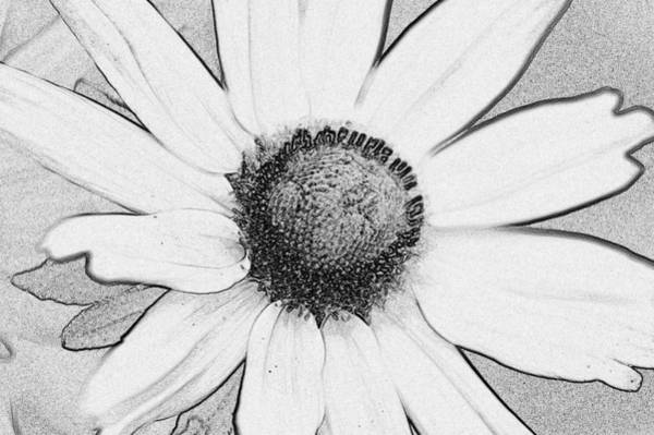 Photograph - Daisy Flower by Donna Bentley