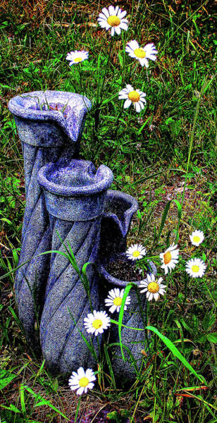 Photograph - Daisy Fountain by Jeff Kurtz