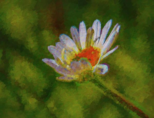 Photograph - Daisy #g0 by Leif Sohlman