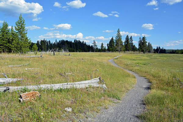 Photograph - Daisy Geyser Trail by Bruce Gourley