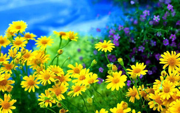 Flower Digital Art - Daisy by Maye Loeser