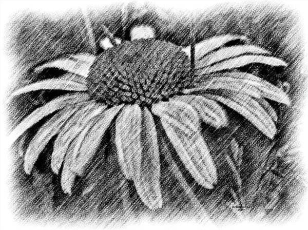 Digital Art - Daisy Sketch by Artful Oasis