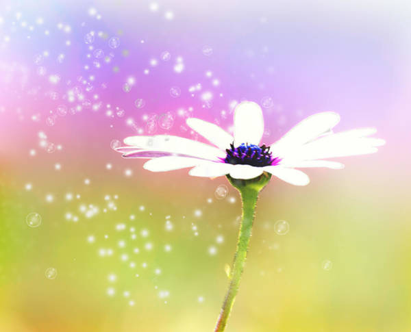 Wall Art - Photograph - Daisy Sparkle by Camille Lopez