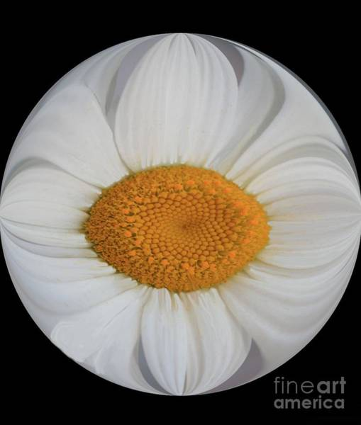 Photograph - Daisy Sunny Side Up by Jean Clarke