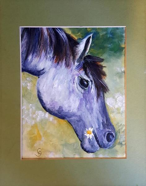 Daisy The Old Mare     52 Art Print