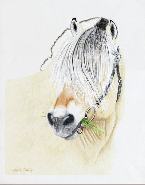 Fjord Drawing - Dalargutt, Norwegian Fjord Stallion by Laurie With