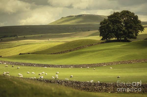 Photograph - Dales Landscape by David Lichtneker