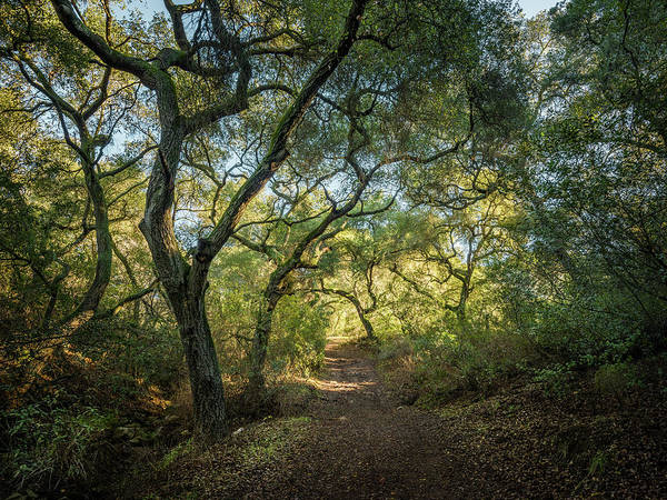 Photograph - Daley Ranch - Cougar Ridge Trail by Alexander Kunz