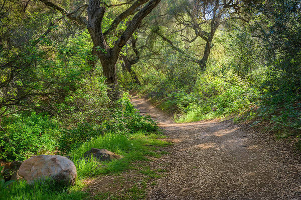 Photograph - Daley Ranch - Trail Through Oak Hollow by Alexander Kunz