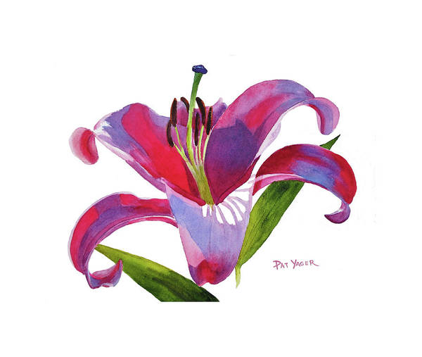 Wall Art - Painting - Dalian Lily Watercolor by Pat Yager