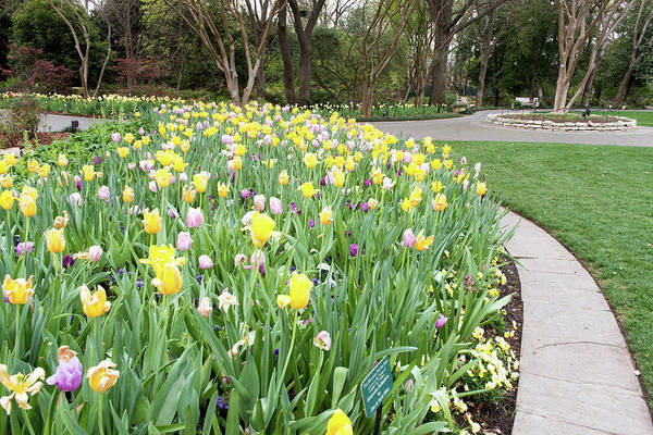 Photograph - Dallas Arboretum Spring 030917 by Rospotte Photography