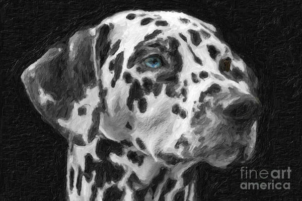 Painting - Dalmatian by Celestial Images