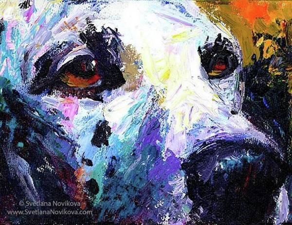 Abstract Photograph - Dalmatian Dog Close-up Painting By by Svetlana Novikova