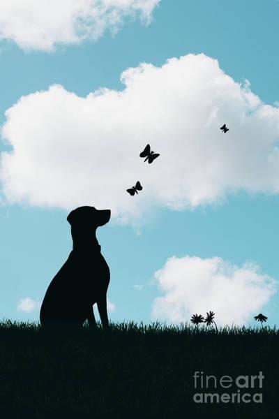 Chase Photograph - Dalmatian Dog Silhouette by Amanda Elwell