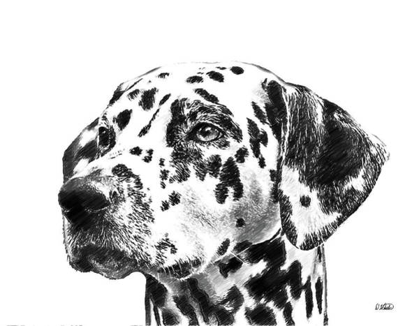 Drawing - Dalmatians - Dwp765138 by Dean Wittle
