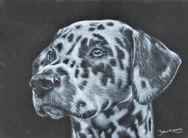 Painting - Dalmation Portrait by John Neeve