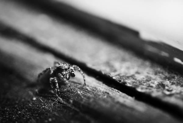 Jumping Photograph - Damn Your Eyes by Matthew Blum