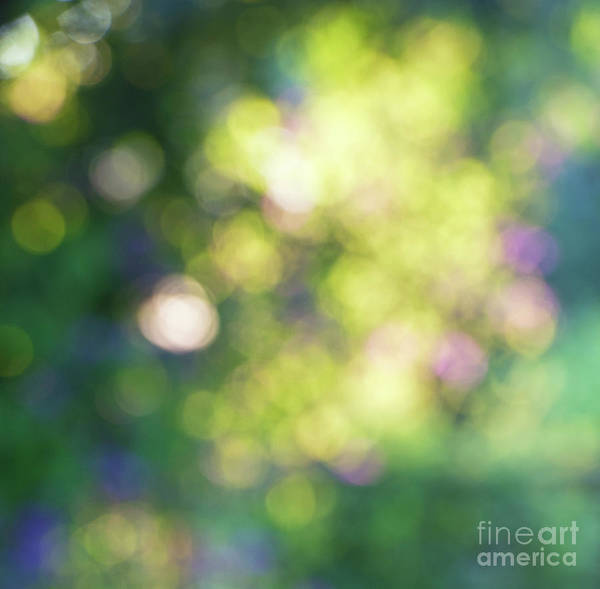 Photograph - Dance Of Dappled Light by Tim Gainey