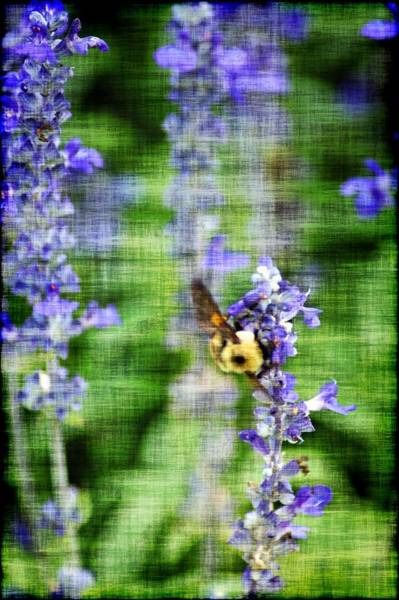 Photograph - Dance Of The Bubblebee by Donna Bentley