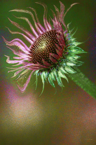 Mixed Media - Dance Of The Cone Flower Bold by Lesa Fine