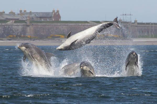 Photograph - Dance Of The Dolphins by Karen Van Der Zijden